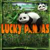 Lucky Pandas